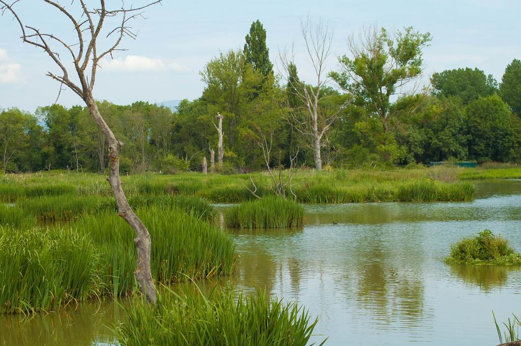 """Una docena de motivos por las que Vitoria-Gasteiz será """"European Green Capital"""" en 2012"""