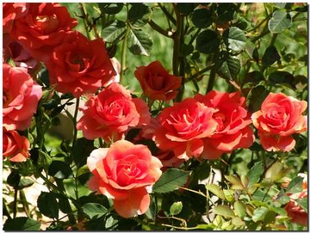 Una docena de plantas resistentes de exterior una docena de - Plantas de exterior con flor ...