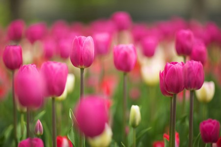 Una docena de plantas resistentes de exterior una docena de - Plantas exteriores todo el ano ...