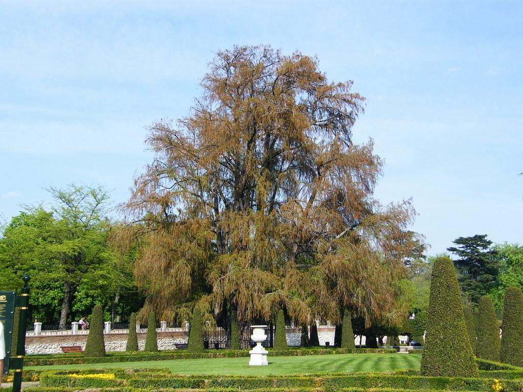 Una docena de árboles singulares para disfrutar en la Comunidad de Madrid