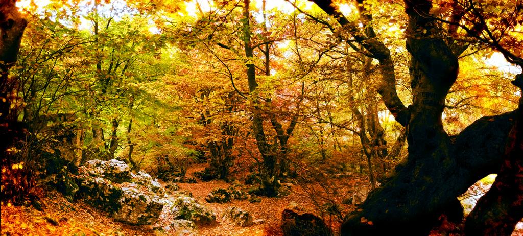 Una docena de parajes naturales donde disfrutar de los colores del Otoño