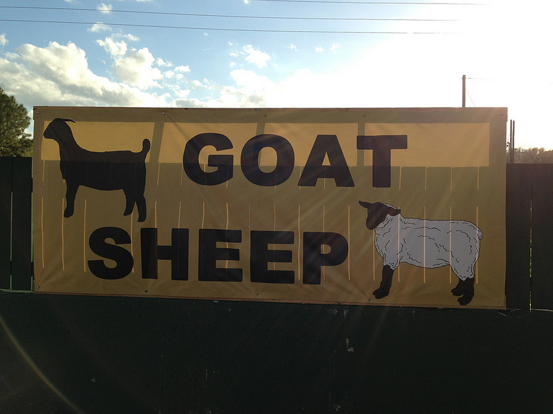 goat-sheep