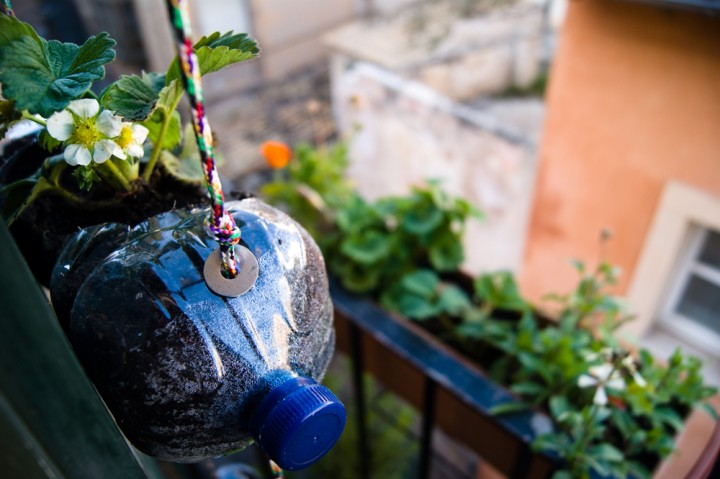 Una docena de ideas para crear un huerto urbano o macetohuerto con materiales reciclados Botella-Huerto-720x479