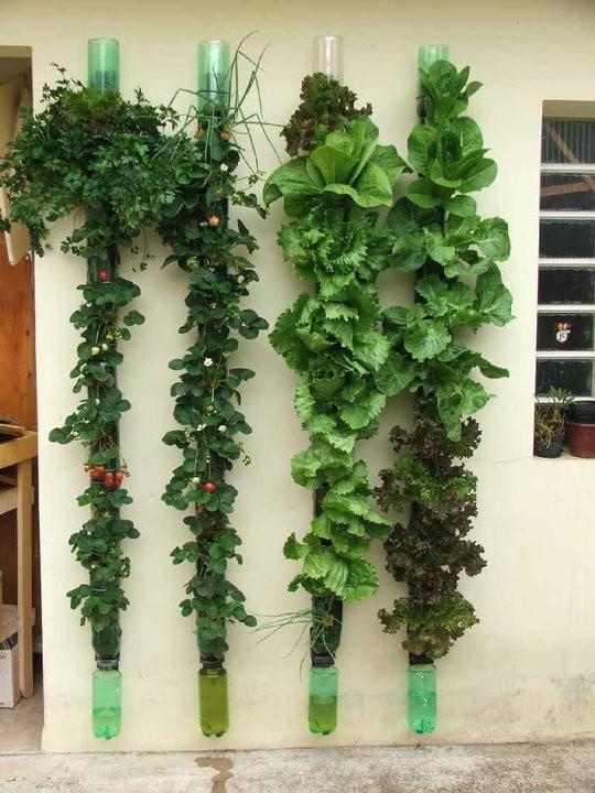 Una docena de ideas para crear un huerto urbano o macetohuerto con materiales reciclados Botellas-de-Pl%C3%A1stico