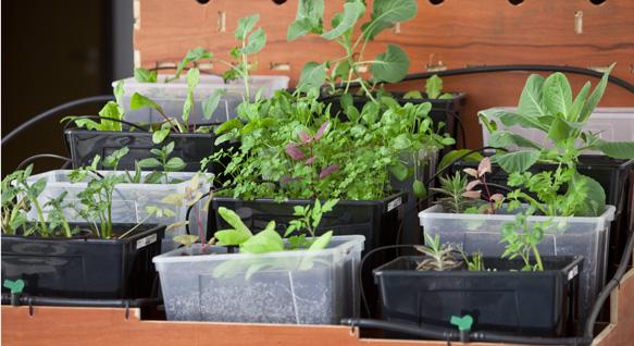Una docena de ideas para crear un huerto urbano o macetohuerto con materiales reciclados Cajas-Plastico-Huerto