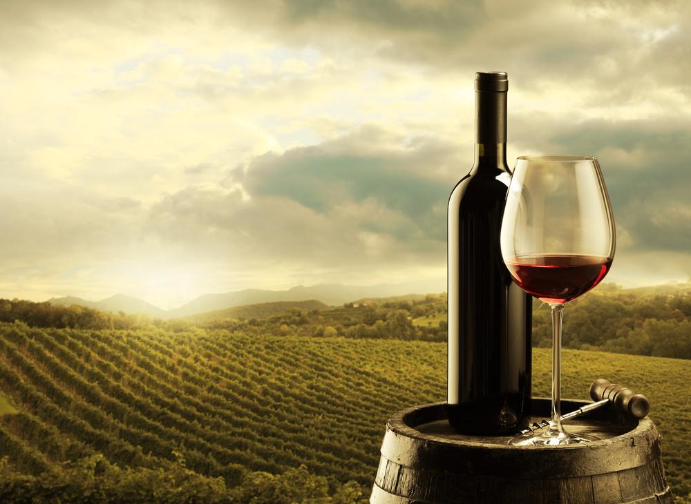 vino-viñedo