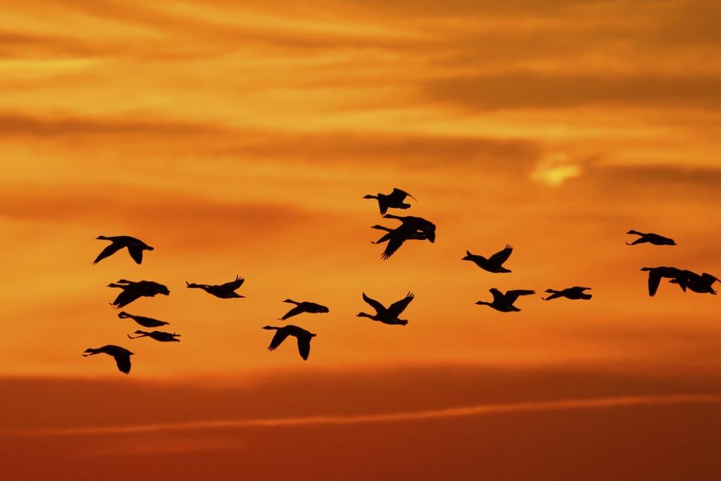Una docena de cosas a tener en cuenta si estás pensando en emigrar